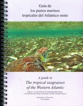 Guía de los pastos marinos tropicales del Atlántico oeste= A Guide to the Tropical Seagrasses of