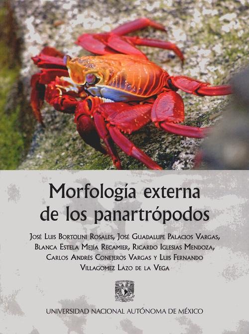 Morfología externa de los panartrópodos